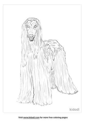 afghan-hound-coloring-page