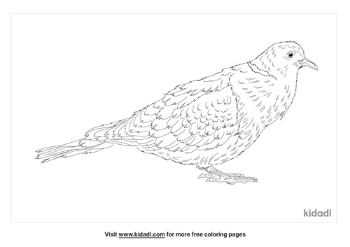 african-collared-dove-coloring-page
