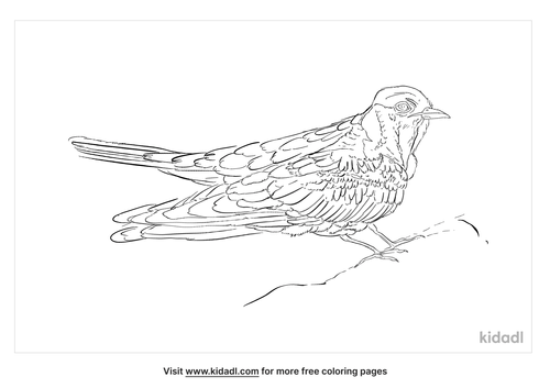 african-cuckoo-coloring-page