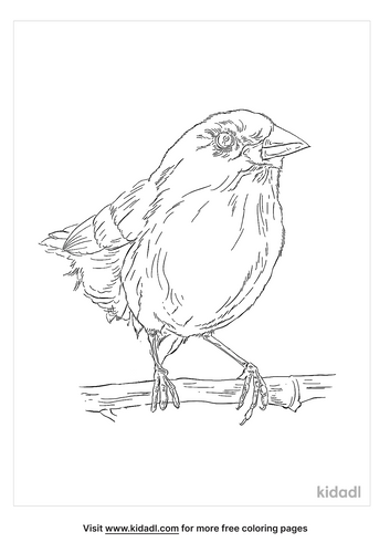 african-firefinch-coloring-page