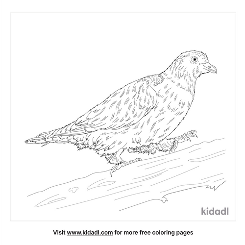 african-green-pigeon-coloring-page