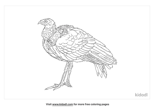 african-harrier-hawk-coloring-page