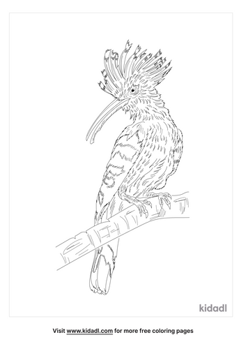 african-hoopoe-coloring-page