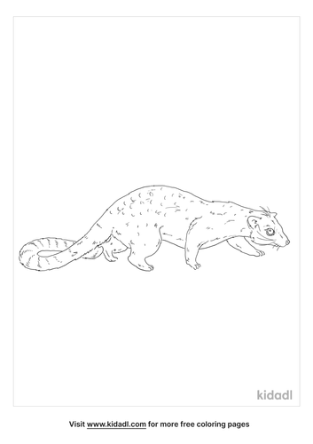 african-palm-civet-coloring-page