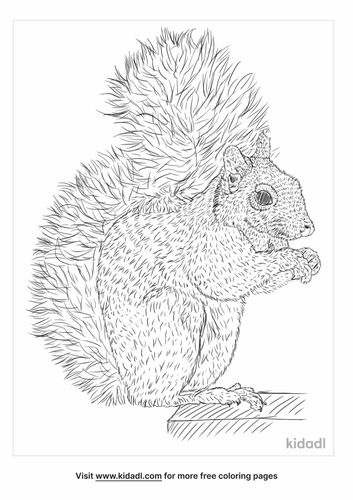 african-pygmy-squirrel-coloring-page