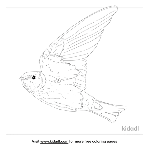 african-swallow-coloring-page