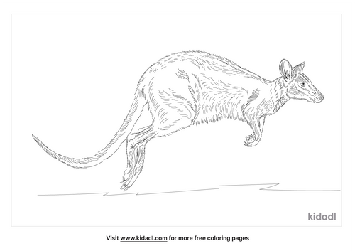 agile-wallaby-coloring-page