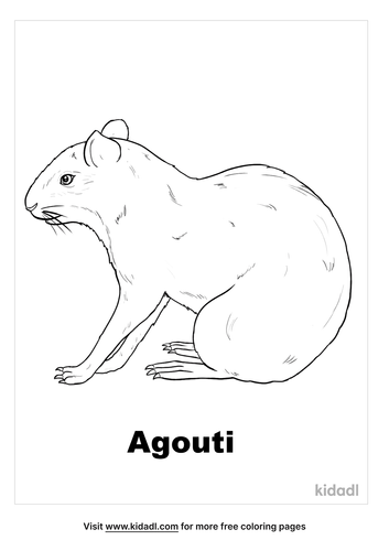 agouti-coloring-page.png