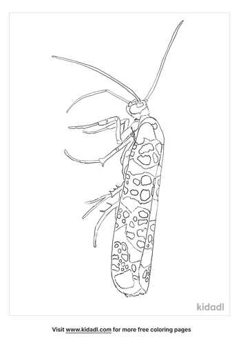 ailanthus-webworm-moth-coloring-page