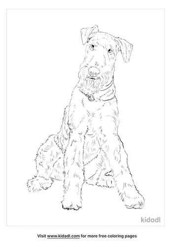 airedale-terrier-coloring-page