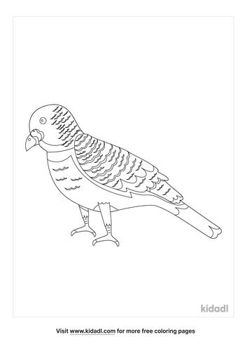 alaska-state-bird-coloring-page-1-lg.png