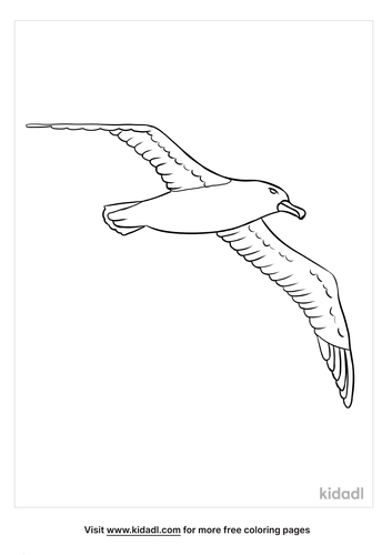 albatross coloring page-2-lg.png