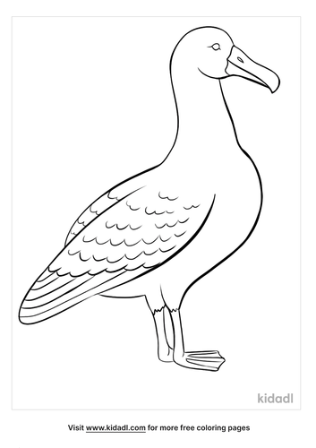 albatross coloring page-3-lg.png