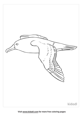 albatross coloring page-4-lg.png