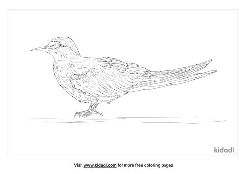 aleutian-tern-coloring-page