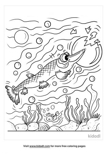alligator gar coloring page-3-lg.png