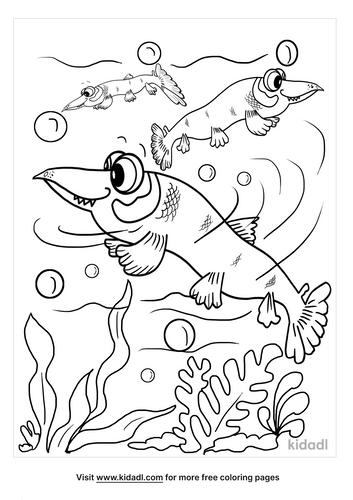 alligator gar coloring page-4-lg.png