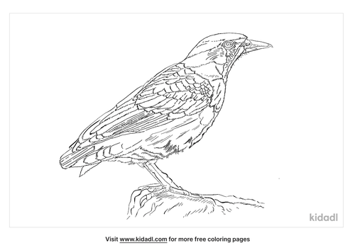 alpine-accentor-coloring-page