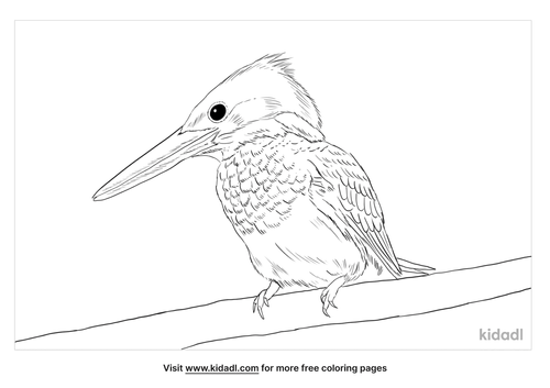 amazon-kingfisher-coloring-page