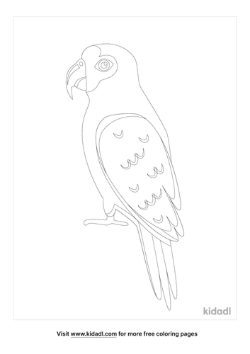 amazon parrot-coloring-page-1-lg.png