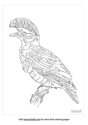 amazonian-umbrellabird-coloring-page