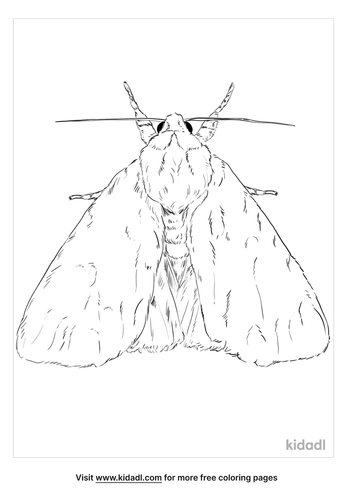 american-dagger-moth-coloring-page