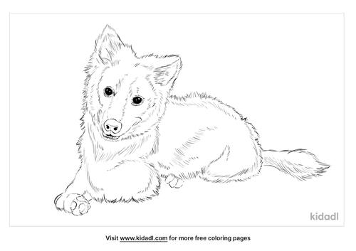 american-eskimo-dog-coloring-page