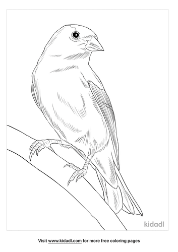 american-gold-finch-coloring-page