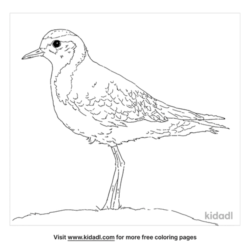 american-golden-plover-coloring-page