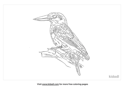 american-pygmy-kingfisher-coloring-page
