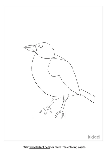 american robin coloring page_2_lg.png