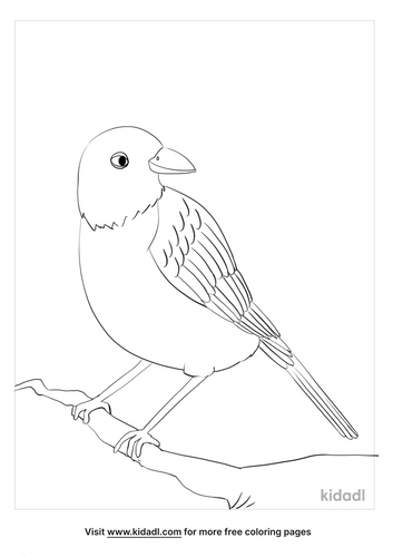 american robin coloring page_3_lg.png