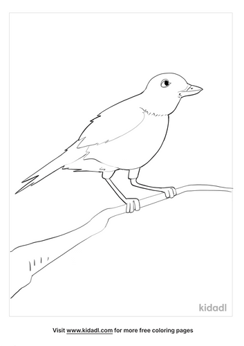 american robin coloring page_4_lg.png