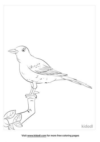 american robin coloring page_5_lg.png