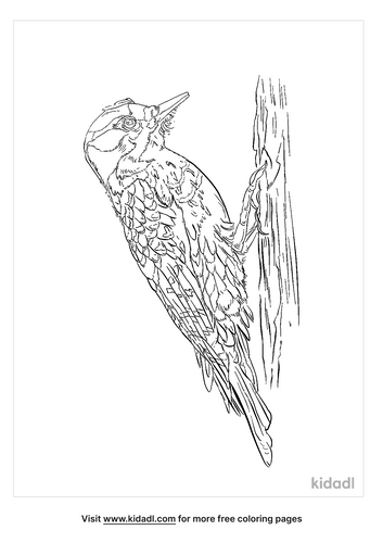 american-three-toed-woodpecker-coloring-page