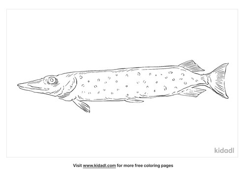 amur-pike-coloring-page