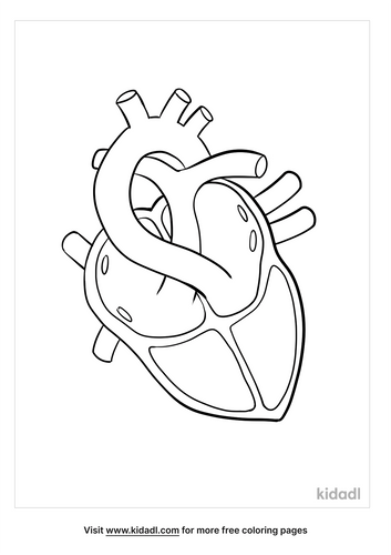 anatomy coloring pages_2_lg.png
