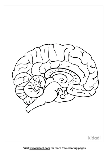 anatomy coloring pages_3_lg.png