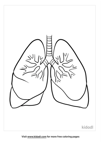 anatomy coloring pages_4_lg.png