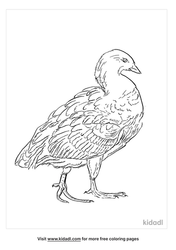 andean-goose-coloring-page