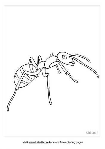 ant coloring page-2-lg.png