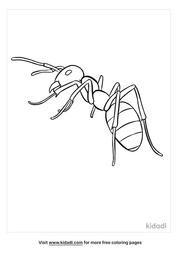 ant coloring page-3-lg.png