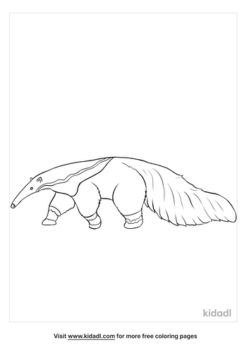 anteater coloring page-2-lg.png