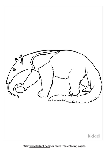 anteater coloring page-3-lg.png