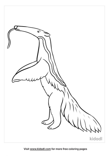 anteater coloring page-5-lg.png