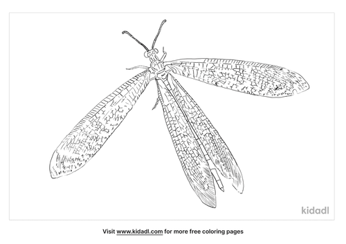antlion-coloring-page