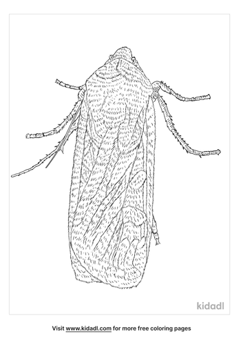 army-cutworm-coloring-page