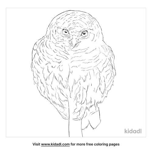 asian-barred-owlet-coloring-page
