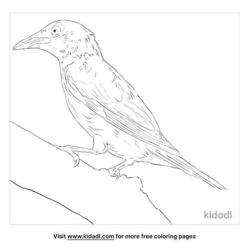 asian-glossy-starling-coloring-page