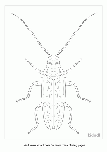 asian-longhorned-beetle-coloring-page